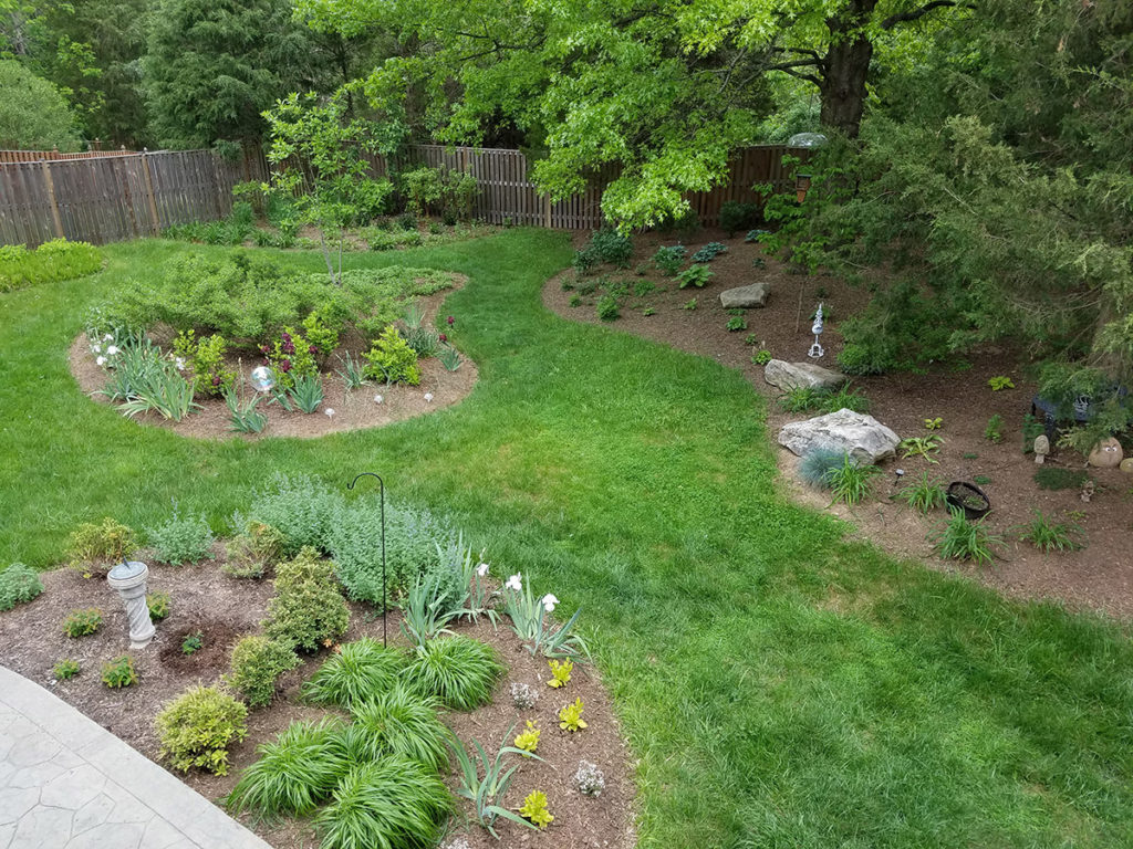 Landscaping a wooded lot - Revolutionary Gardens